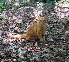 Cat Friend  by Jonathan  Green