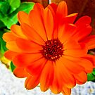Orange Burst! by Lyndy