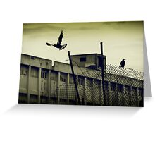 Magpies - Fremantle Power Station Greeting Card