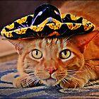 Cat in the Black Sombrero by Diana Cardosi-Bussone