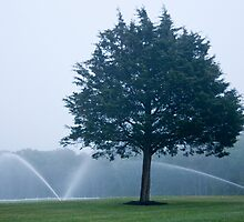 Hazy Day Sprinklers by phil decocco