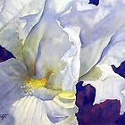 White Iris by Joe Cartwright