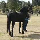 Odin - Friesian gelding by louisegreen
