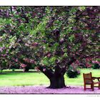 Under the Shade Tree by Florence Womacks