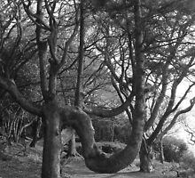 Weird Tree by Lazertooth