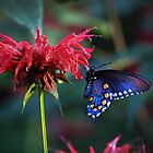 """""""Butterfly & Bee-Balm"""" by Melinda Stewart Page"""