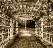 Entwine - Wahroonga Park (Sepia) by Jason Ruth