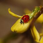 Dusty Ladybird by PinkK