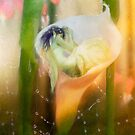 The Faeries Nest by Aimee Stewart