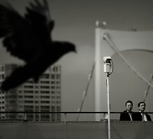 The black pigeon, Tokyo by Laurent Hunziker