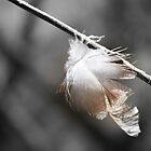 One Single Feather by Bellavista2