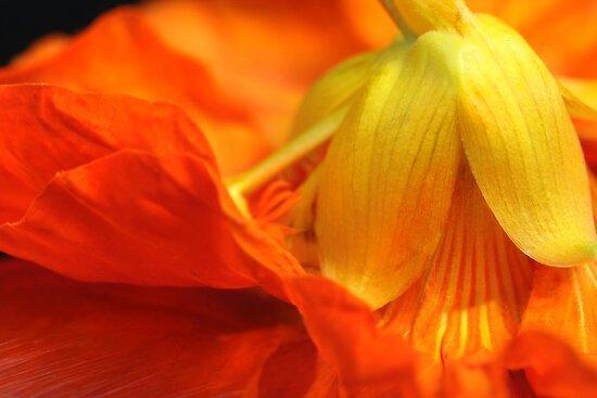 Ballet des Fleurs by SmoothBreeze7