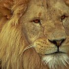 Lion IV by Tom Newman
