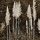 Toi Toi Grass in Sepia by Jen Waltmon