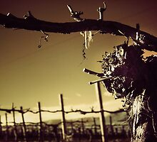 Heard it through the grapevine by Angie Muccillo