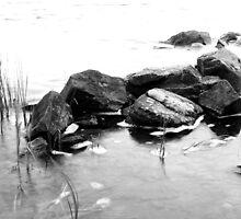 Rocks by Ellis Lawrence