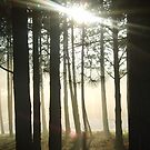 The Winter Sun of Sherwood Pines by Fotasia