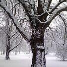January Snow by Davies72