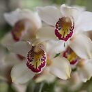 Orchid by Anna D'Accione
