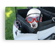 Chihuahua Demonstrates Napping Techniques in Goggles and Helmet Canvas Print