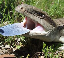 Eastern Blue-tongue Lizard by EnviroKey