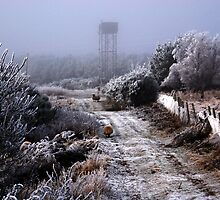 Frosty foggy day by OpalFire