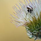 Bee on a White Thistle by Corri Gryting Gutzman