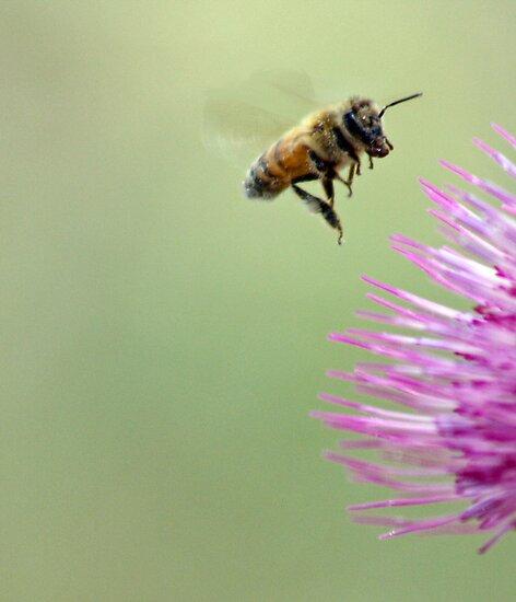 Don't Worry. Bee Happy. by Corri Gryting Gutzman