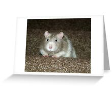 No, I'm not a hamster but a fancy rat! Greeting Card