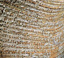 Woven Bark by Haydee  Yordan