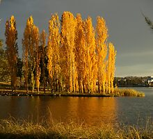 Autumn Gold at Lake Ginninderra - Canberra by shortshooter-Al