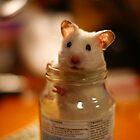 Hamster in a jar by Vincent Teh