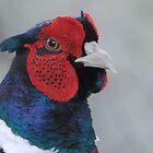Pheasant ((Phasianus colchicus) Portrait  by ©FoxfireGallery / FloorOne Photography