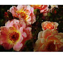 Vintage Roses. Photographic Print