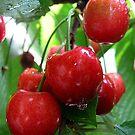 Sweet cherry after a rain by kindangel