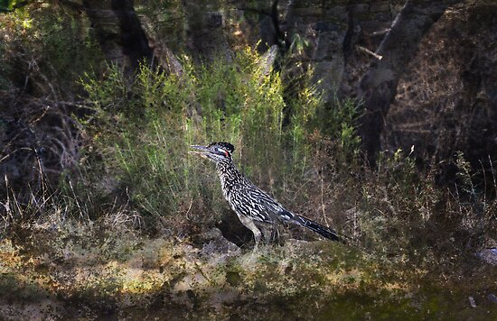 I'm a Roadrunner, Baby! by Barbara Manis