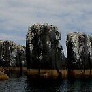 Farne Islands by nathanw08