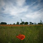 Poppyfield by Nigel Bangert