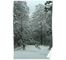 Snowing in Mt Disappointment Forest Poster