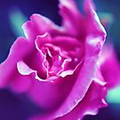 the rose by Wendie