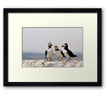A Puffin Meeting Framed Print