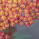 Pink sensation by Anne Staub