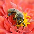 Bee Pink by Sarah Jennings