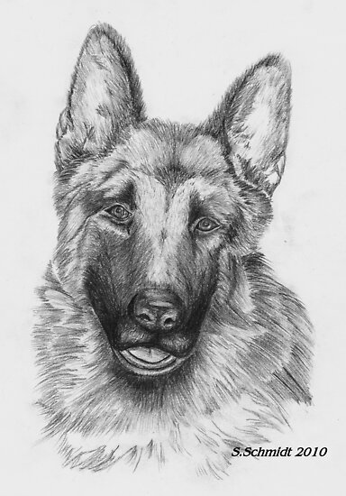 German Shepard by Sharlene  Schmidt