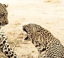 Karula and Mixo Hissing - Djuma Game Reserve by KathrynLouw
