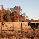 A South Carolina Scenic by Regenia Brabham