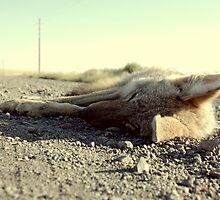 7 A.M. Roadkill by dacodahulse