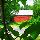 Trees..... oh yes, and a Barn by Debbie Robbins