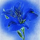 ~ Blue Lily ~ by Brenda Boisvert