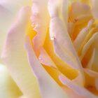 Unfolding... by LindaR